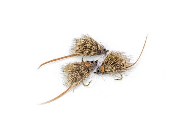 Bild på Mouse #10