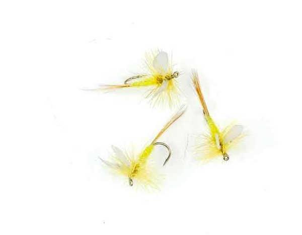 Bild på Yellow Cream Dun #14