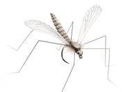 Bild på Json Realistic Body Cranfly Cream (12 pack)